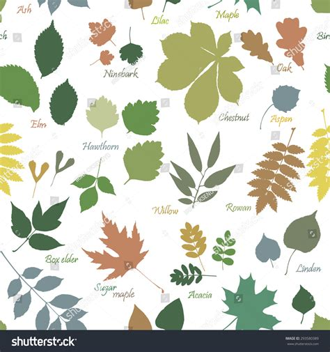 multicolor pattern leaves vector seamless pattern multicolor leaves silhouettes