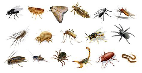 Imagenes Animales Artropodos   invertebrados animales