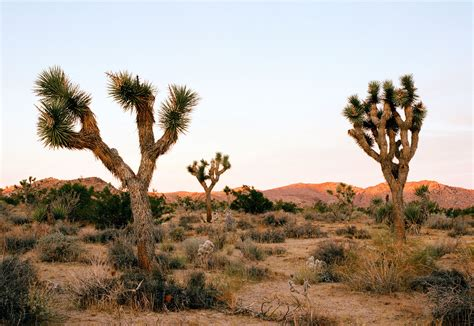 Joshua Tree hikers embracing in joshua tree died in murder