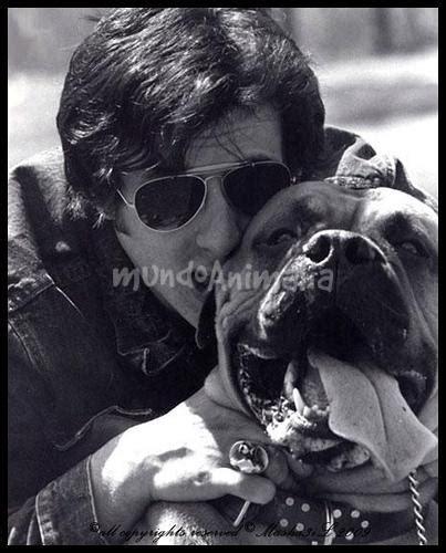 Sepatu Stallone 6 J 132 perros y perras de personajes famosos pasado y de