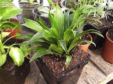 common house plant seeds plant identification closed help i d these common house