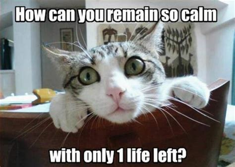 Cat Meme Pictures - cat memes