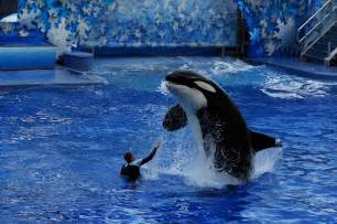 Sea World Major Hotel Expansions Rumored For Seaworld Orlando And