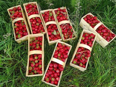 Erdbeere Mieze 2019 by Aktuelles Erdbeerhof Schuster