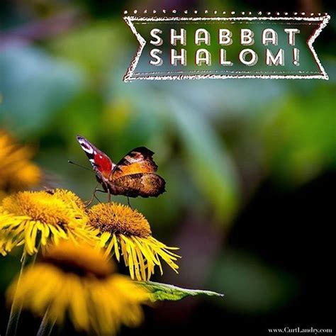 shabbat shalom images 741 best shabbat shalom images on shabbat