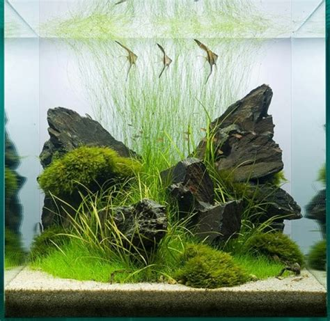 freshwater aquascaping 1000 images about aquarium inspiration on pinterest red