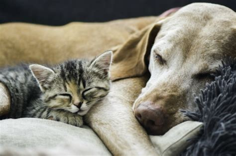 are dogs smarter than cats science says dogs are smarter than cats