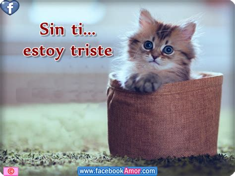 imagenes de estoy triste por ti amor frases celebres con gatitos lindas imagenes de tristeza
