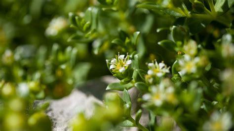 flore du mont diberville objectif nord tele quebec