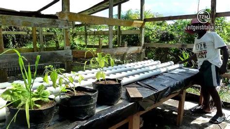 vaso idroponico zeit pillola 2 la coltivazione idroponica
