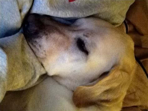 how to treat ear infection without vet best 25 vet help ideas on vet meaning your vets and care