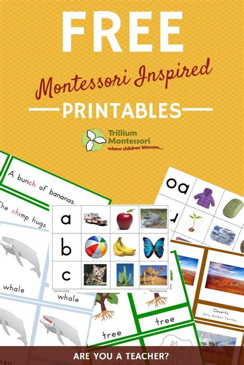 printable montessori cards free resource library montessori free and homeschool