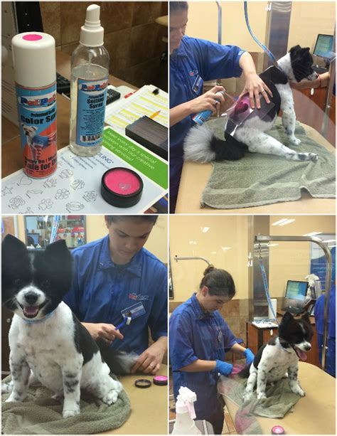 petsmart puppy grooming mr pink get s a fabulous pink makeover
