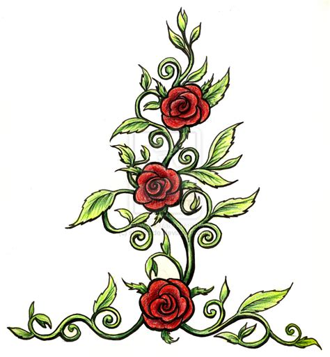 pictures of rose vine tattoos pin vine on