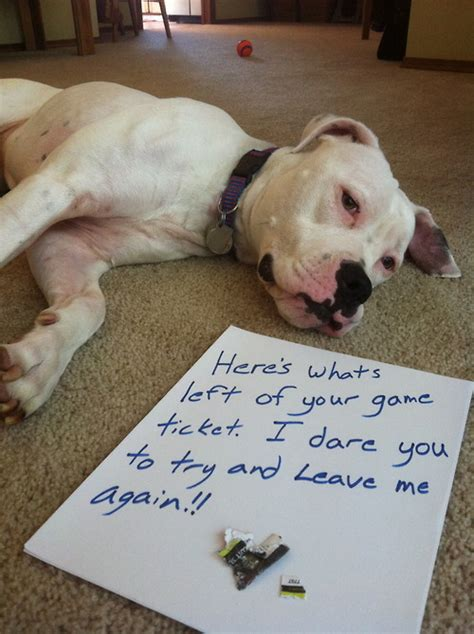 puppy shaming the 10 best guilty photos redbarn pet products