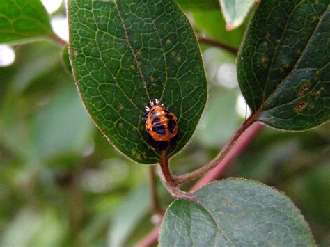 garden pest identification garden insect identification pictures to pin on