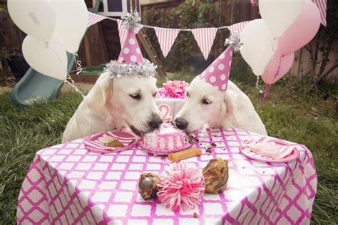 golden retriever birthday cake happy birthday tina the bearden pack