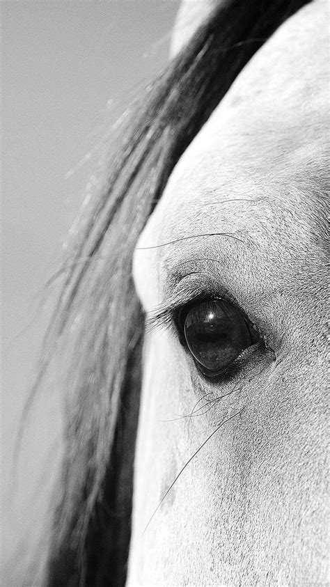 mb wallpaper eye  peace  horse papersco
