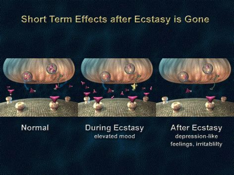 Mdma Detox Time by 1 Term Effects After Ecstasy Is From The