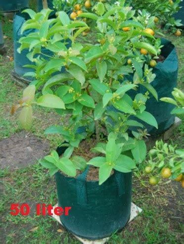 Planterbag 20 Liter Hijau jual planter bag hijau 50 liter bibit