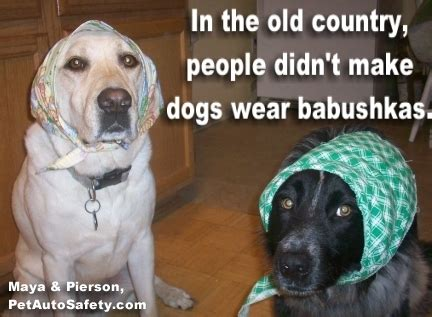 New Dog Meme - new funny dog memes american dog blog