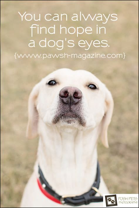 how to say puppy in as dogs would say quote 10 pawsh magazine