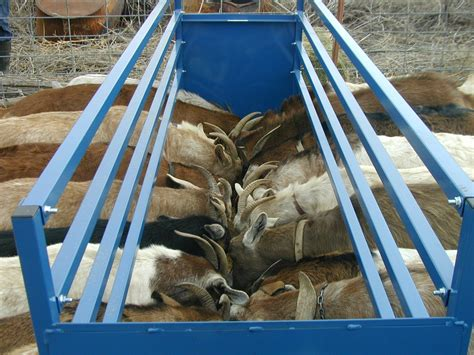 Goat Hay Rack Feeder by Small Hay Feeder Goat Car Interior Design
