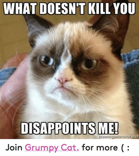 grumpy cat joins cats on 25 best memes about what doesnt kill you disappoints me