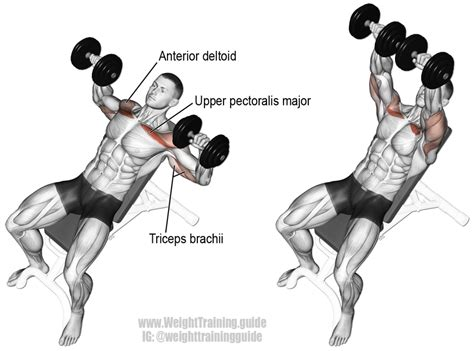 muscles worked by bench press incline dumbbell bench press instructions and video