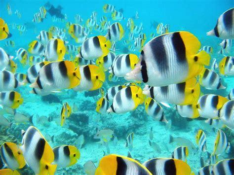 wallpaper for desktop fish moving fish wallpapers for desktop