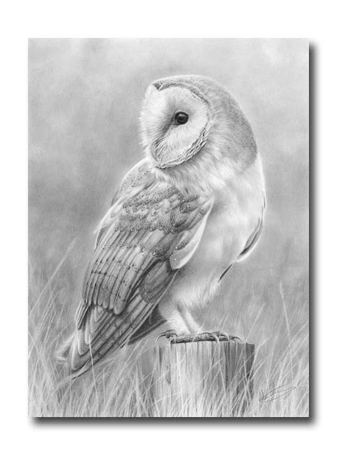 Nolon Stacey A Pencil Artist S Blog Barn Owl Number 3 Barn Owl Drawing