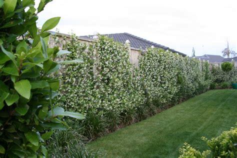 may 2012 colour garden green and white rukuhia