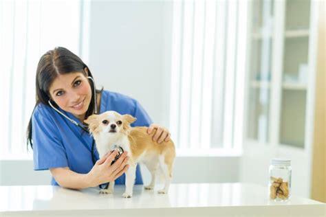 puppy s vet visit your pet s vet visit