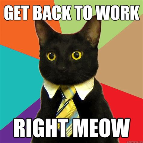 Working Cat Meme - get back to work right meow business cat quickmeme