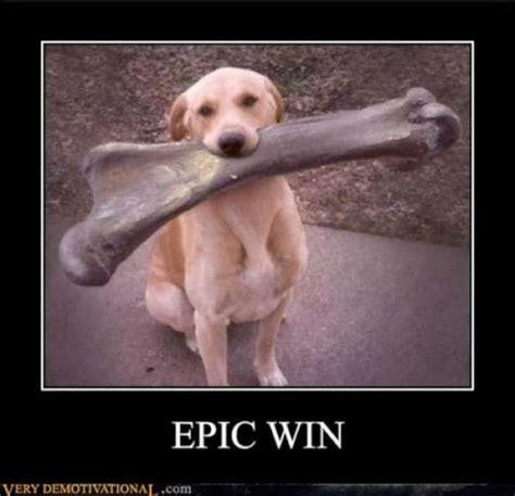 Epic Win Meme - funny dog epic win w630