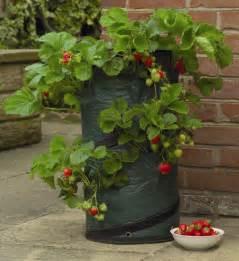 pop up strawberry patio planter h58cm x d31cm 163 6 99