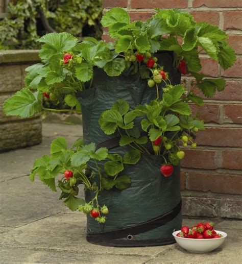 Strawberry Planters Uk by Pop Up Strawberry Patio Planter H58cm X D31cm 163 6 99