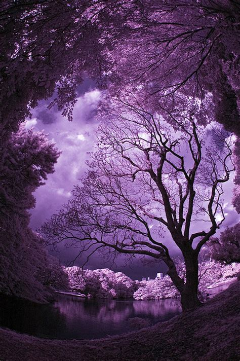 purple sky pictures   images  facebook tumblr pinterest  twitter