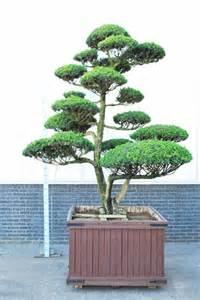 garten bonsai kaufen bonsai gartenbonsai shop bonsai kaufen gartenbonsai