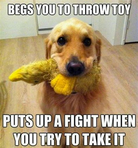 Memes About Dogs - funny dog memes that feature a picture of a pooch and a