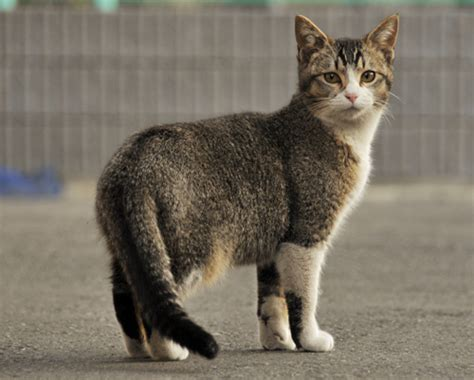 Tabby Cat Pictures   Cute Cats