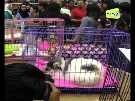 cara melatih toilet kucing funnycat tv