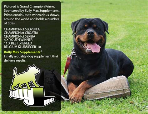 bully rottweiler pitbulls on bully max bully max suplemento para quotes