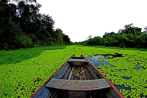 hängesessel amazonas 10 datos curiosos sobre el amazonas
