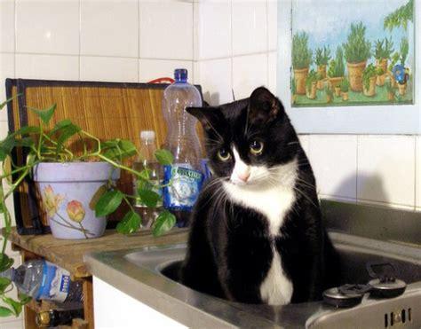 pericoli in casa i pericoli in casa per gli animali domestici la cucina
