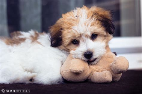 house training an adopted dog adopting a puppy you will need these puppy training