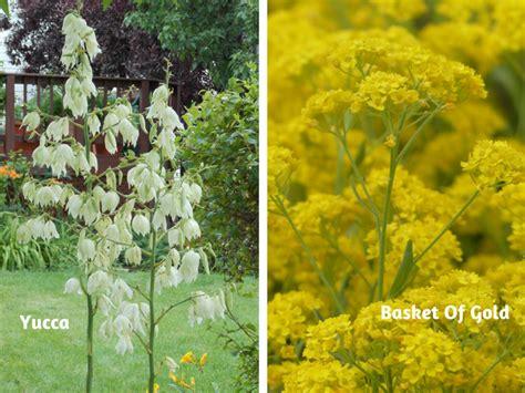 deer resistant perennials tips flowers gardening blooming secrets