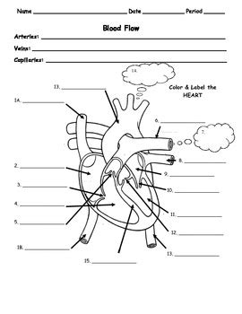 coloring pages blood worksheet human body circulatory flow of blood in the heart