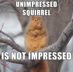 Even A Blind Squirrel Finds A Nut Epic Pix 187 Like 9gag Just Funny 187 Unimpressed Squirrel