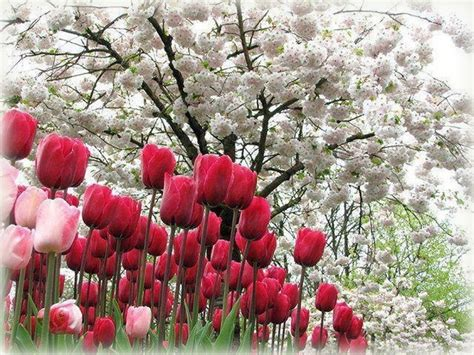 imagenes bonitas de paisajes con flores imagenes bellas de flores con mensajes las mejores
